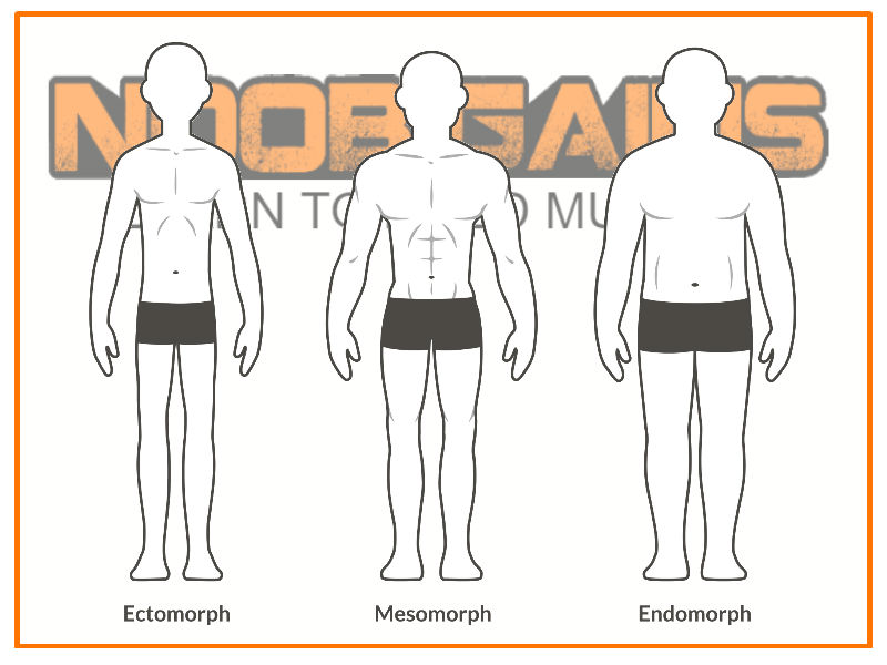Male physique chart showing somatotypes
