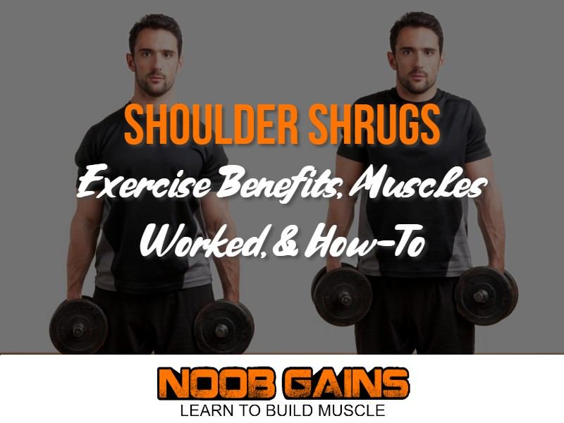 What muscles do shrugs work image
