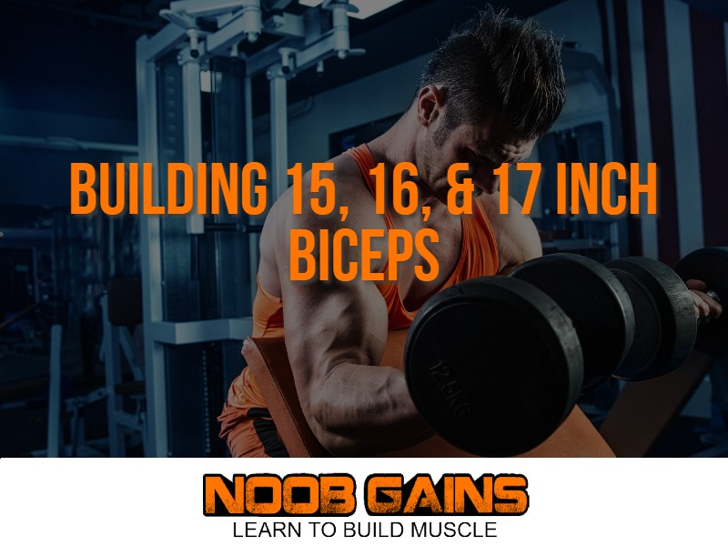 15 16 17 inch biceps image1